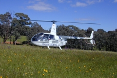 Australia Blue Mountains R44 in meadow